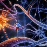 Бег полезен для развития мозга