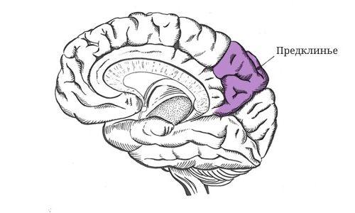 Предклинье участок головного мозга