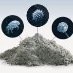 Как грязь и пыль в вашем доме могут повлиять на здоровье