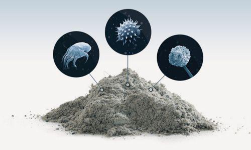 Чем опасны грязь и пыль в доме